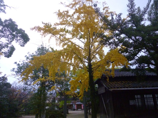 2012.11.13-sya3.JPG