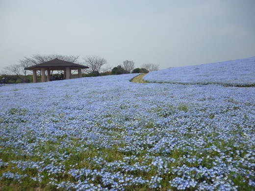 2013.4.16-sya4.JPG